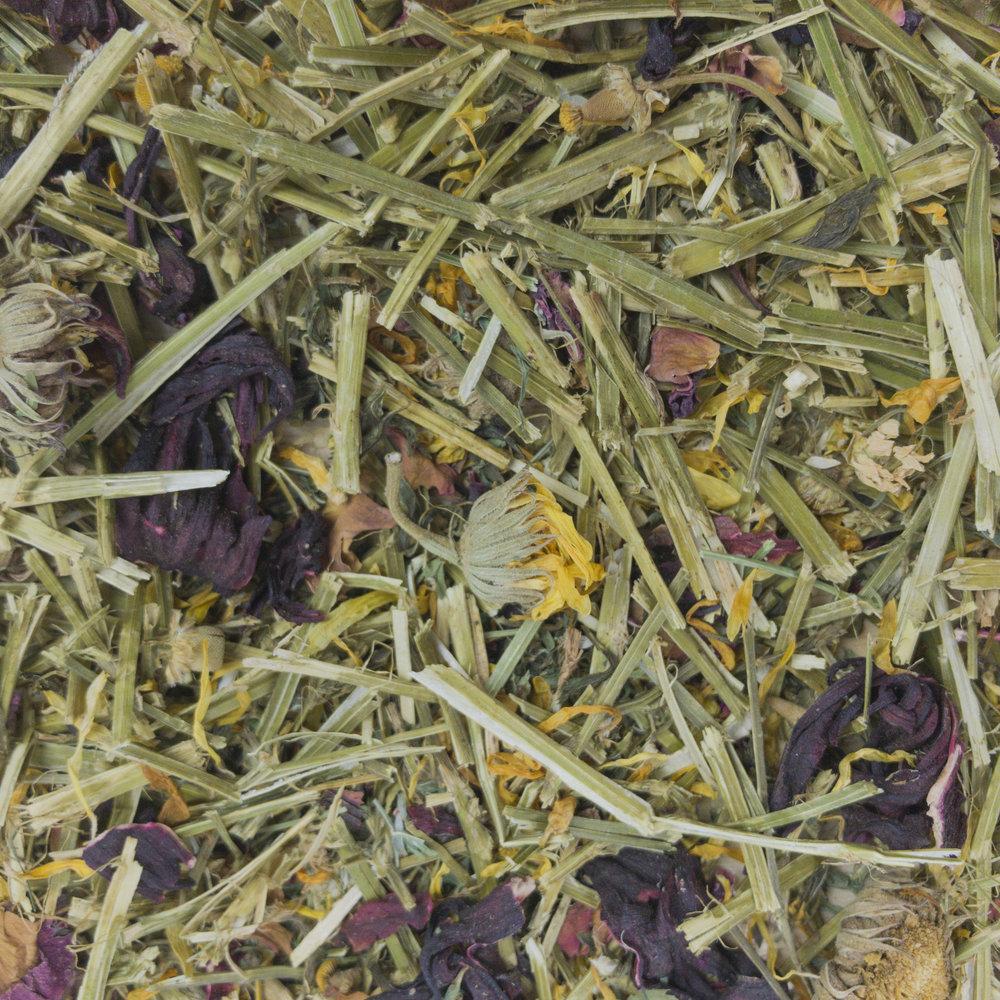 32305_Sunburst-Treats_Wild-Flower-Meadow_Full-Size.jpg