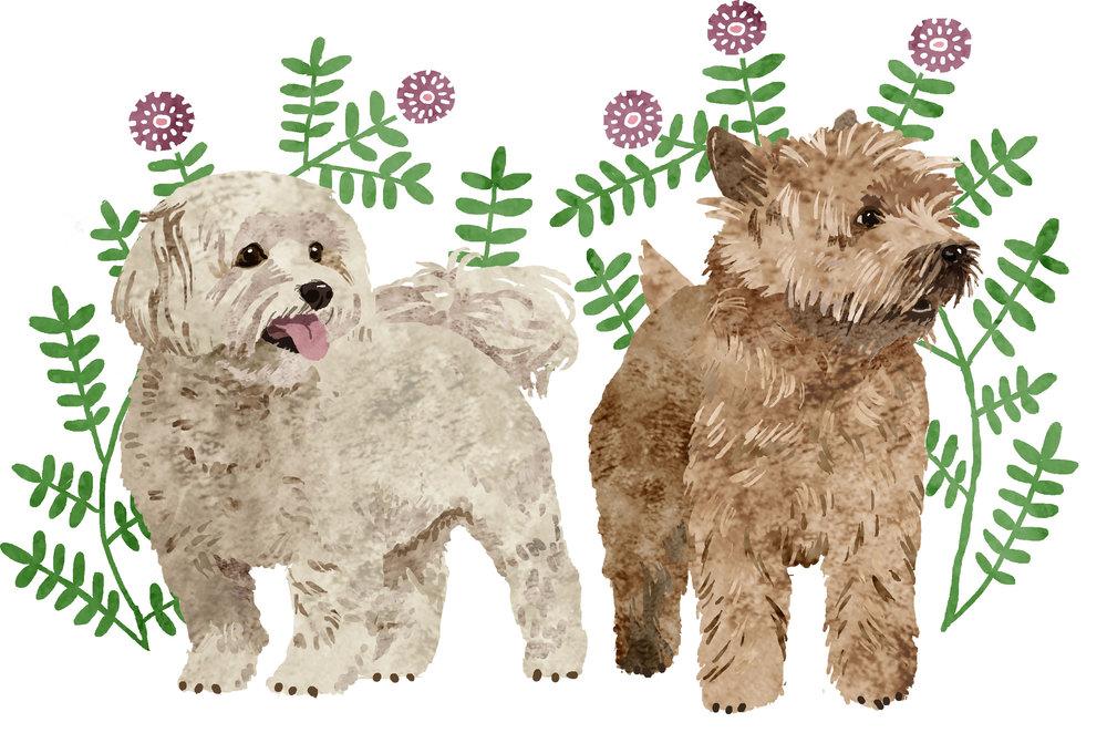 terriers2.jpg