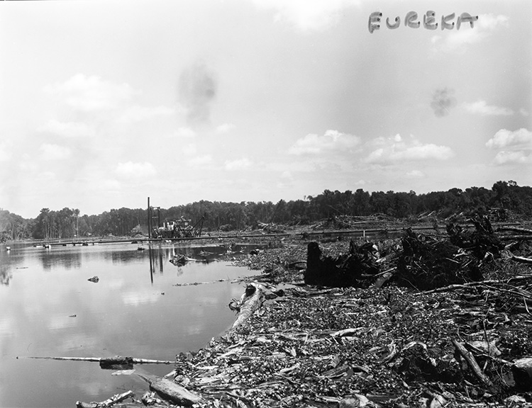 Land clearing on the Oklawaha - Eureka, Florida. 196-.  Black & white photoprint. State Archives of Florida, Florida Memory. Accessed 21 Dec. 2018.  https://www.floridamemory.com/ items/show/1308 .