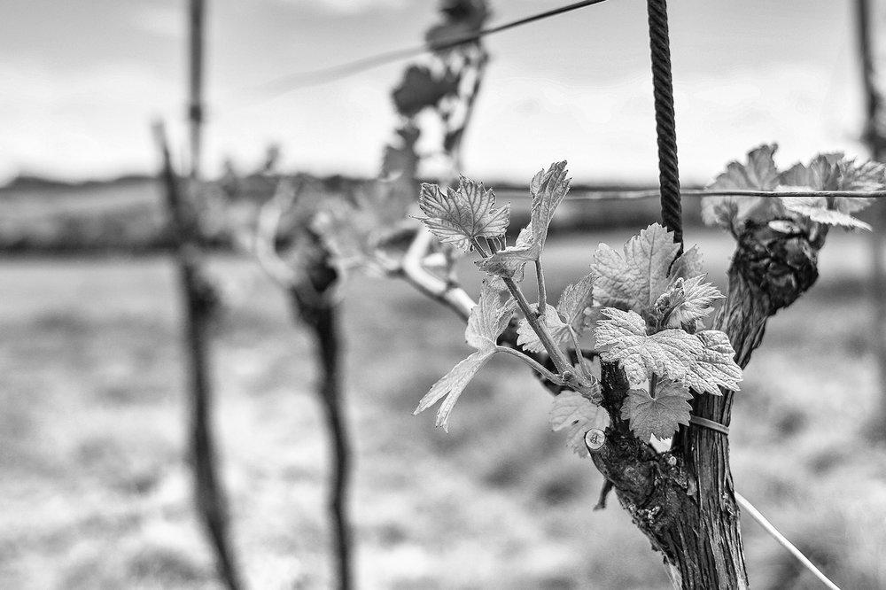 wine-season-picjumbo-com (1).jpg
