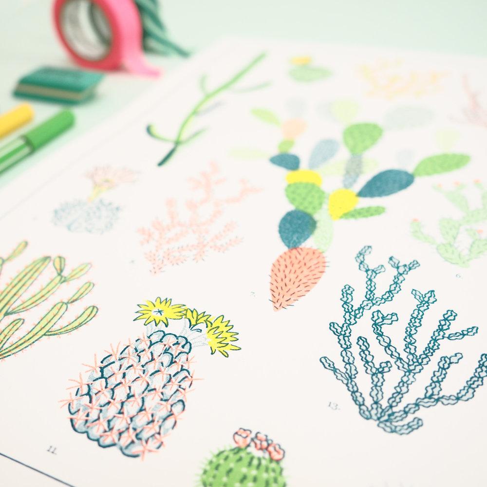 Cacti-Botanical-Natural-History-Riso-Print-2.jpg