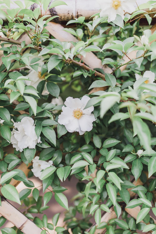 Tokyo Imperial Garden Engagement-MaralNooriPhoto -29.jpg