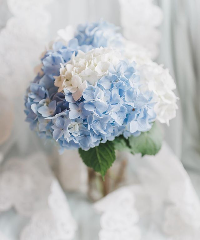 Has anyone else noticed that hydrangea season is in full bloom? From the garden of @hillyonce's wonderful mama (@bloomindee)! #yonceinalifetime #maralnooriwedding #maralnooridetails