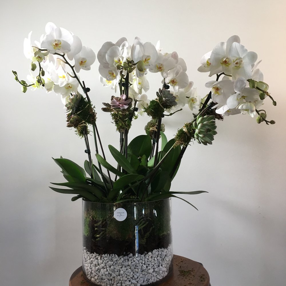 grand orchid