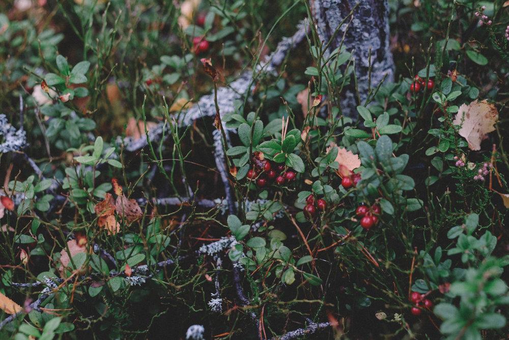 skogen-2.jpg