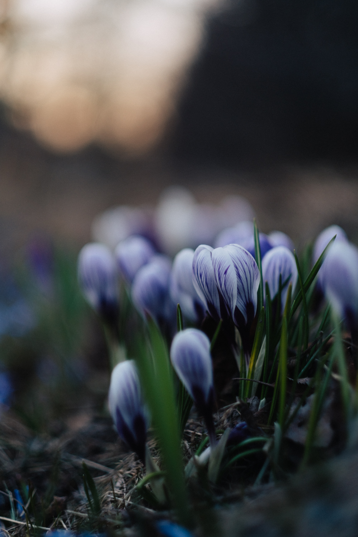 Snön var ju så seg den här våren, men mitt i allt såg det ut så här i ett dike nära mig...