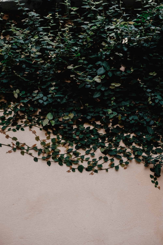 vinterträdgården-2.jpg