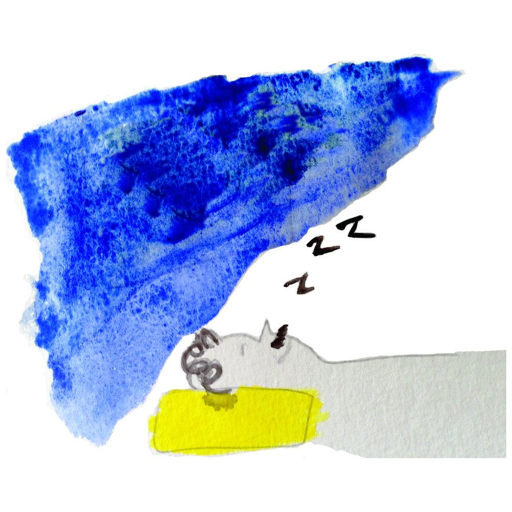 sleepWildInt.jpg