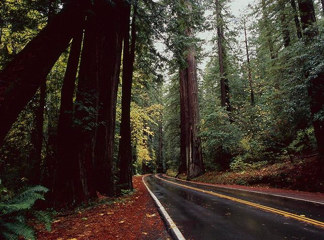 Road through redwood forest #redwoods #redwoodnationalforest #redwoodforest #redwoodvalley #californiaredwoods #californiaredwoodtrees