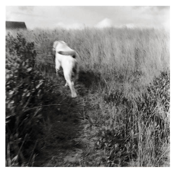 Block Island , 2000  (dog going home)  gelatin silver print