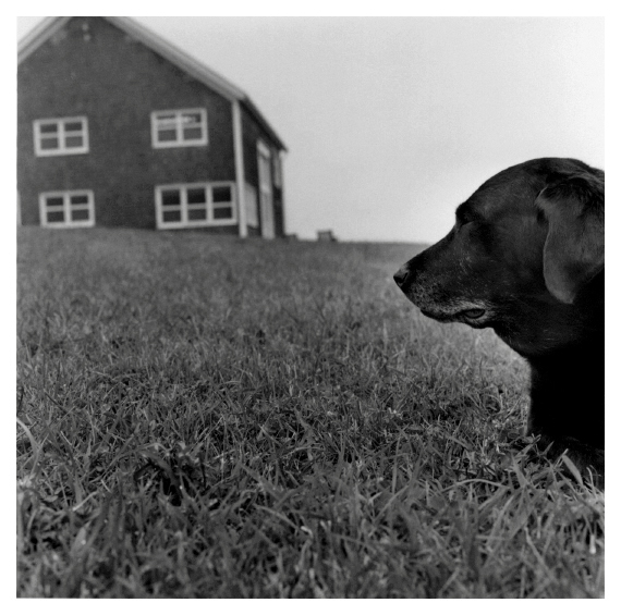 Block Island , 2004  (dog in foreground)  gelatin silver print