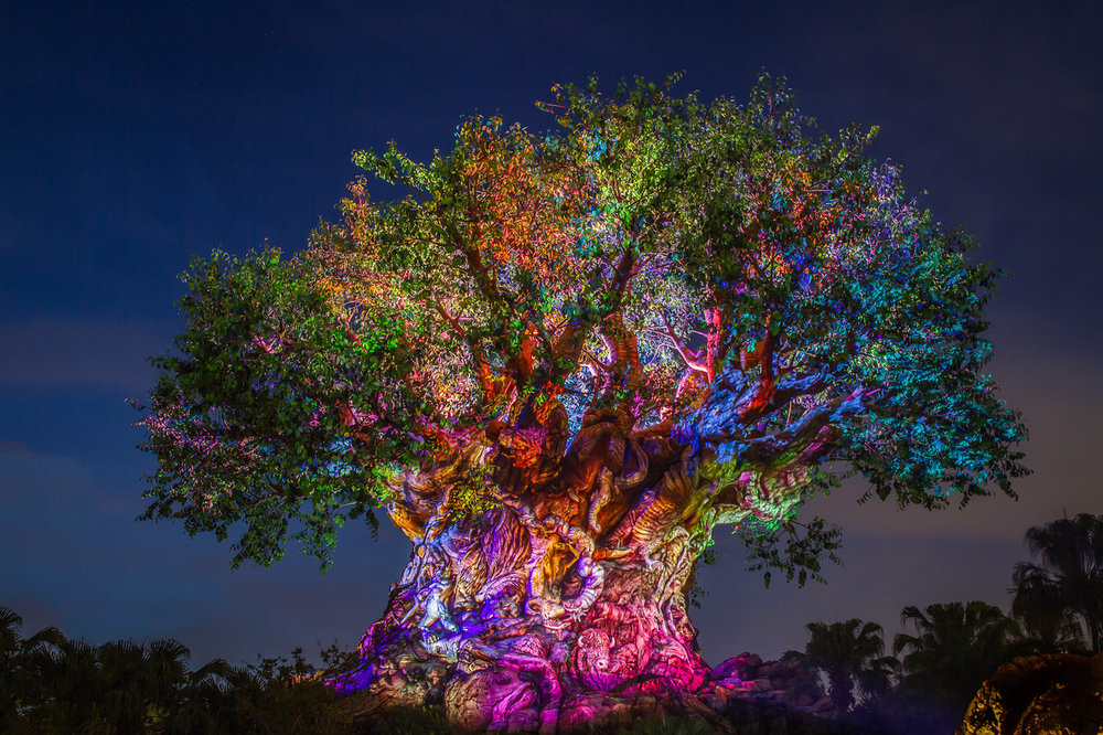 Animal Kingdom - The Tree of Life