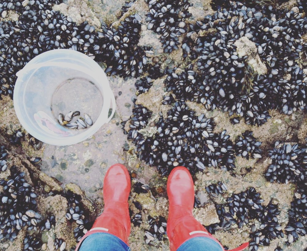 Starting to collect my mussels. Wellies are essential