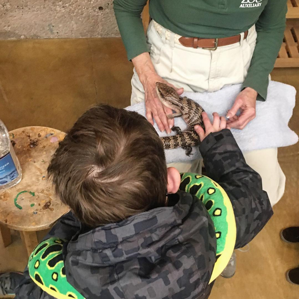 A boy pets a reptile at Cheyenne Mountain Zoo in Colorado. Denver Family Photography | Lifestyle photographer