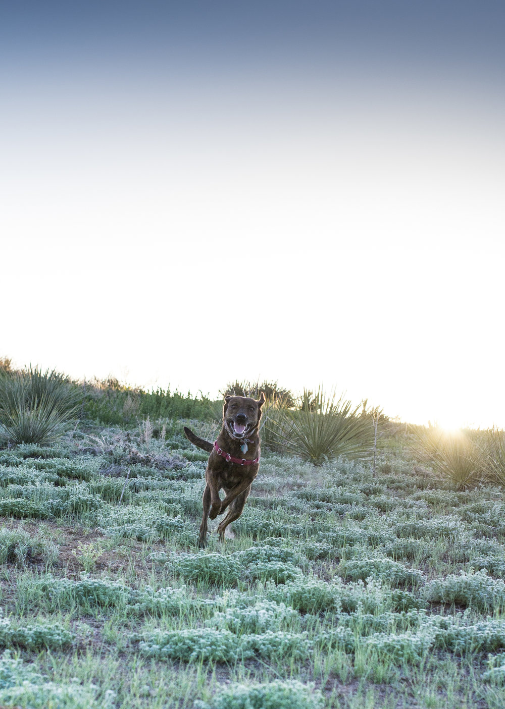 A dog runs down the hill in Cherry Creek Reservoir, one of Colorado's State Parks. Denver Family Photographer | Lifestyle photography