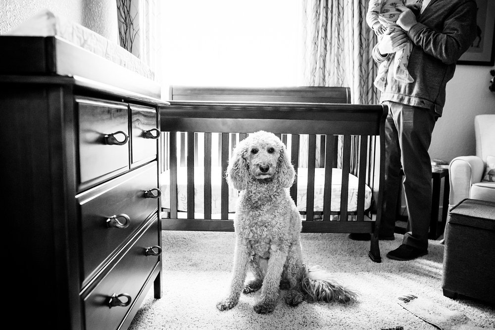 A dog stands guard to protect a father and his baby during a family lifestyle photo session in Denver, CO.