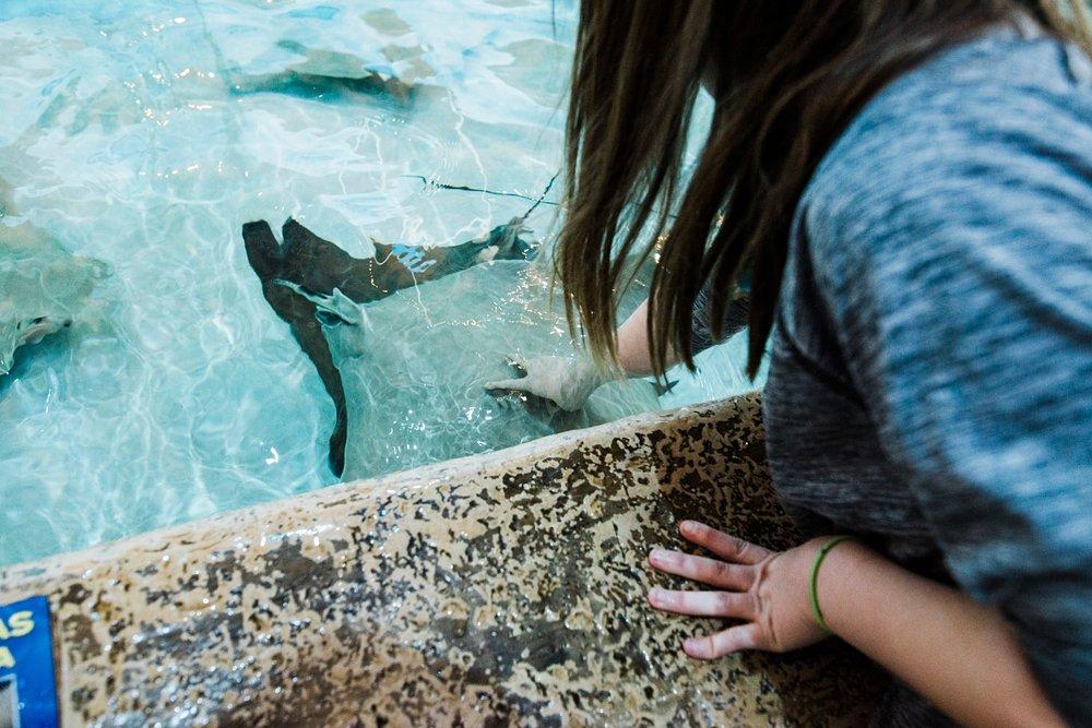 aquarium post updates-3.jpg
