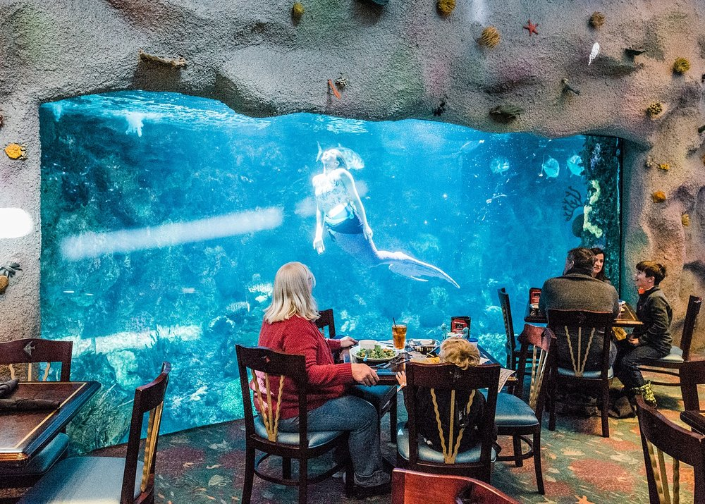 There isn't a bad seat for the mermaid show at Denver's Downtown Aquarium. See the Top 5 Favorite things about the Denver Aquarium on the blog today! | Getting Unschooled is a lifestyle and unschooling blog about a family of four in Denver, Colorado.