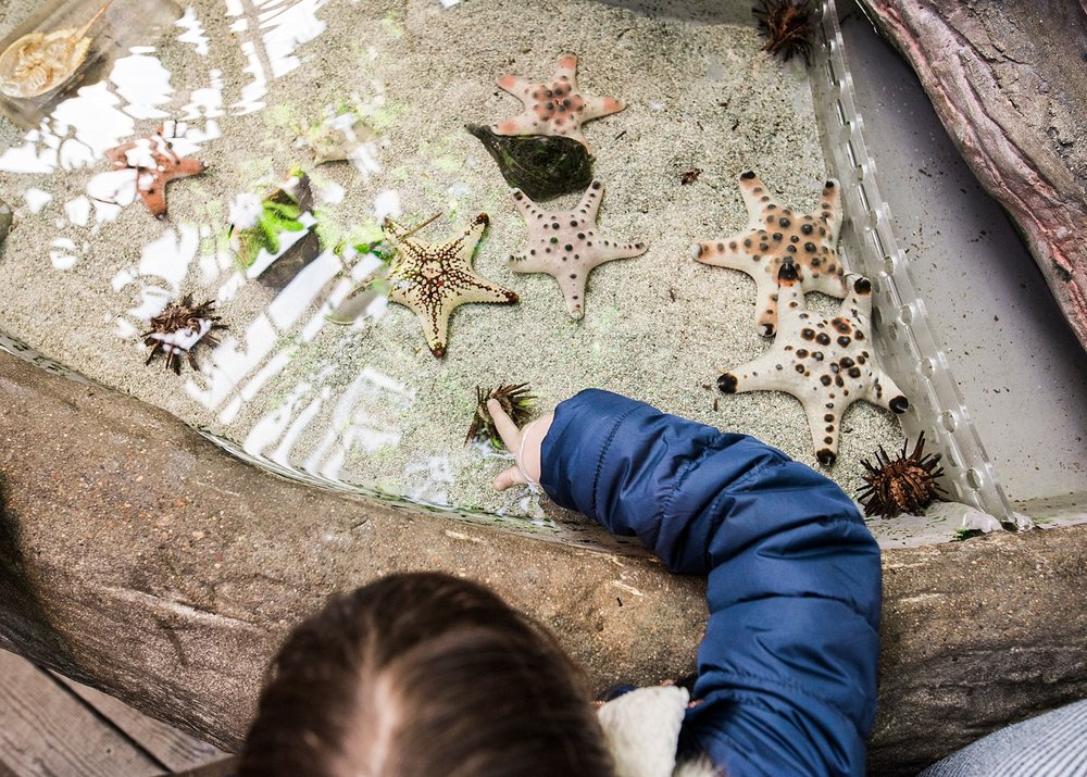 There are plenty of hands-on experiences at Denver's Downtown Aquarium!  Read our Top 5 Favorite things about it on the blog. | Getting Unschooled is a blog about a family of four who are unschooling their kids in Denver, Colorado.