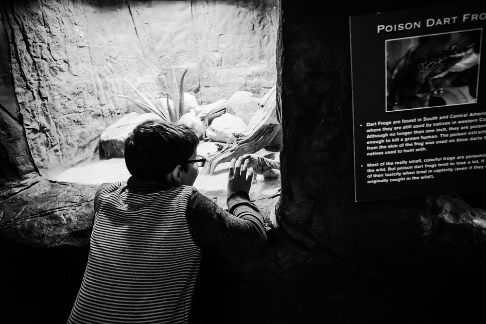 Our-top-5-favorite-things-about-the-denver-aquarium-getting-unschooled.jpg