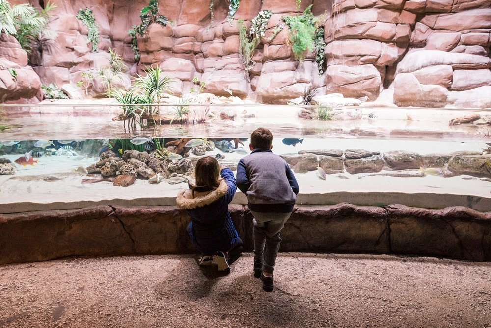 Our Top 5 Favorite Things About the Denver Aquarium. It's a must-see if you are planning a visit to Denver, Colorado. | Getting Unschooled is a lifestyle and unschooling blog that follows the adventures of a family of four as they unschool their two kids in Denver, Co.