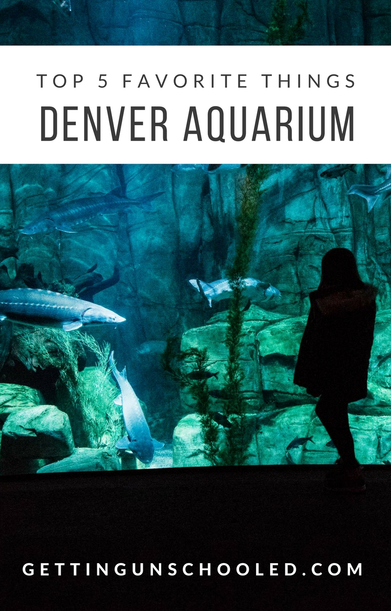 Our Top 5 Favorite Things About the Denver Aquarium on the blog today! It's a must-see if you are visiting Denver, Colorado. | Getting Unschooled is a lifestyle and unschooling blog that follows along as a family of four jumps into unschooling feet first in Denver, Colorado.