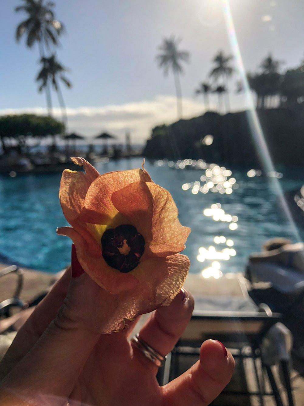 Maui-26.jpg