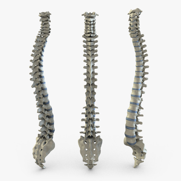 BB - Spine - 00.jpg244409b5-2760-4658-8018-a8c38888504dLarge.jpg