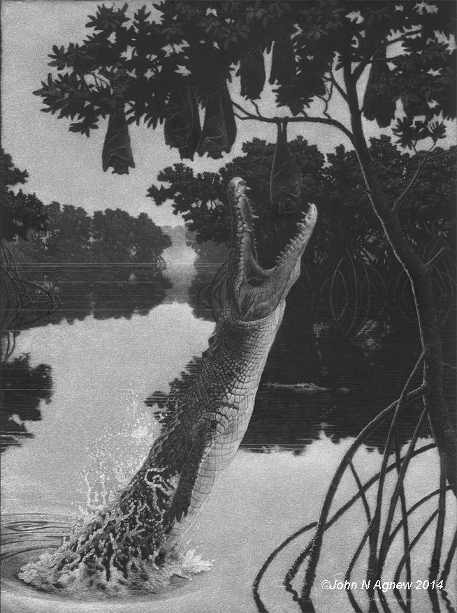 Leaping Croc_72.jpg