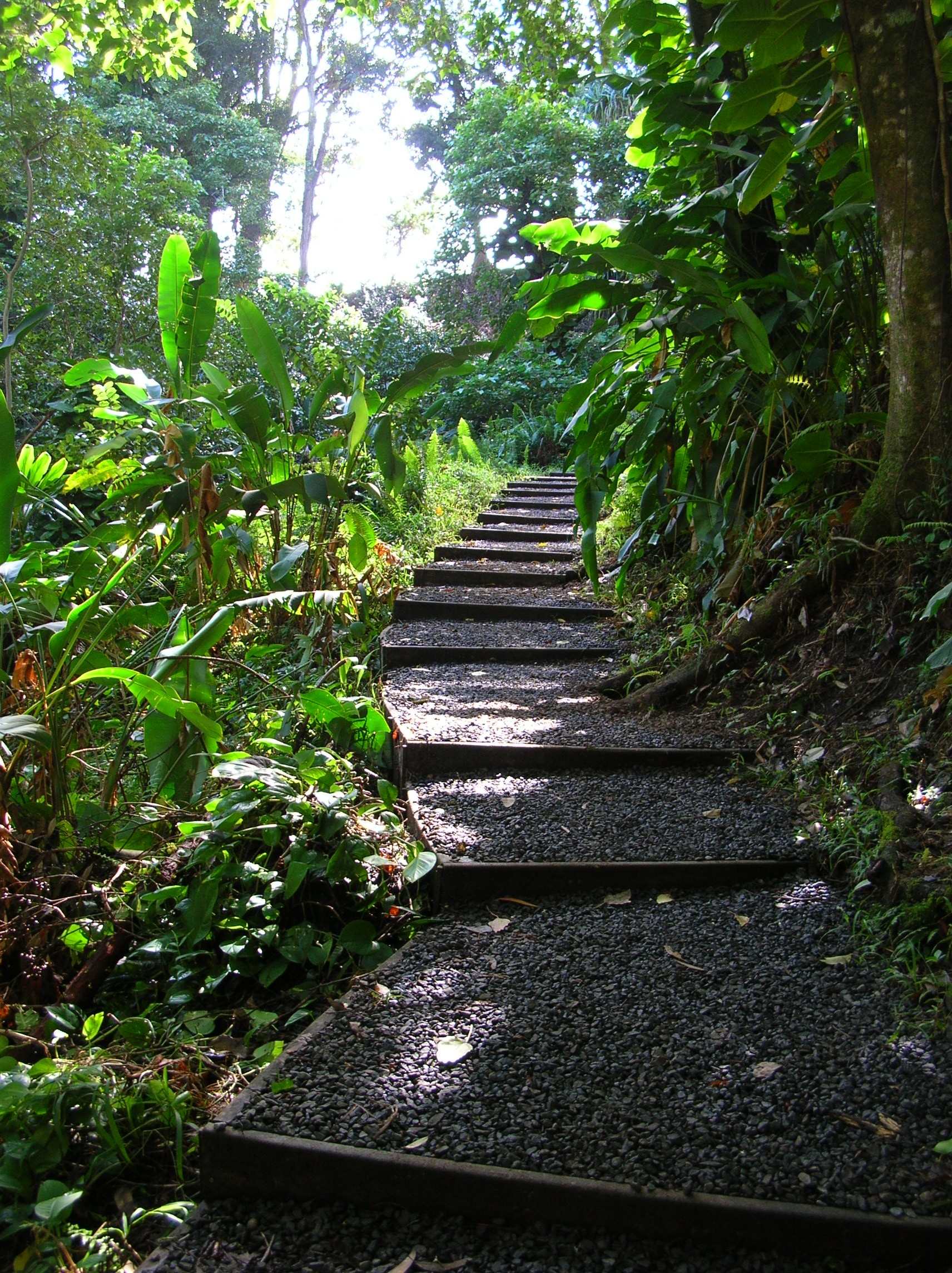 Hike the Cloud Forest of Waikamoi: Auction Package to Benefit Hawaiian Islands Land Trust