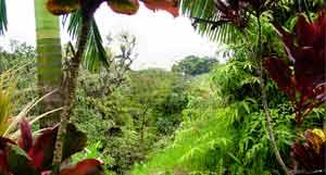 Maui-Nahiku.jpg