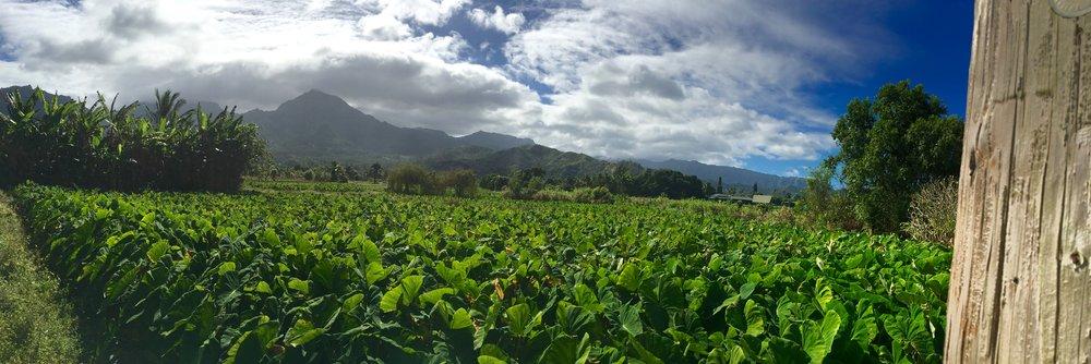 Waioli Valley Conservation Easement, Hanalei, Kauai