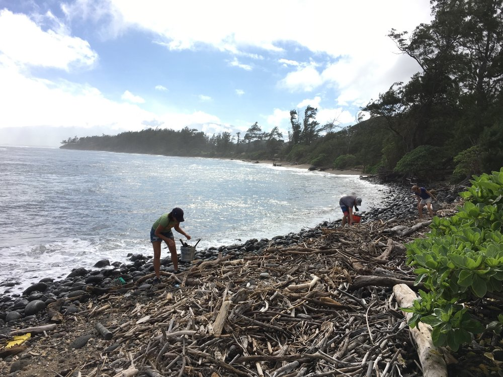 Skyline Eco-Adventures Beach Clean Up at Waihee