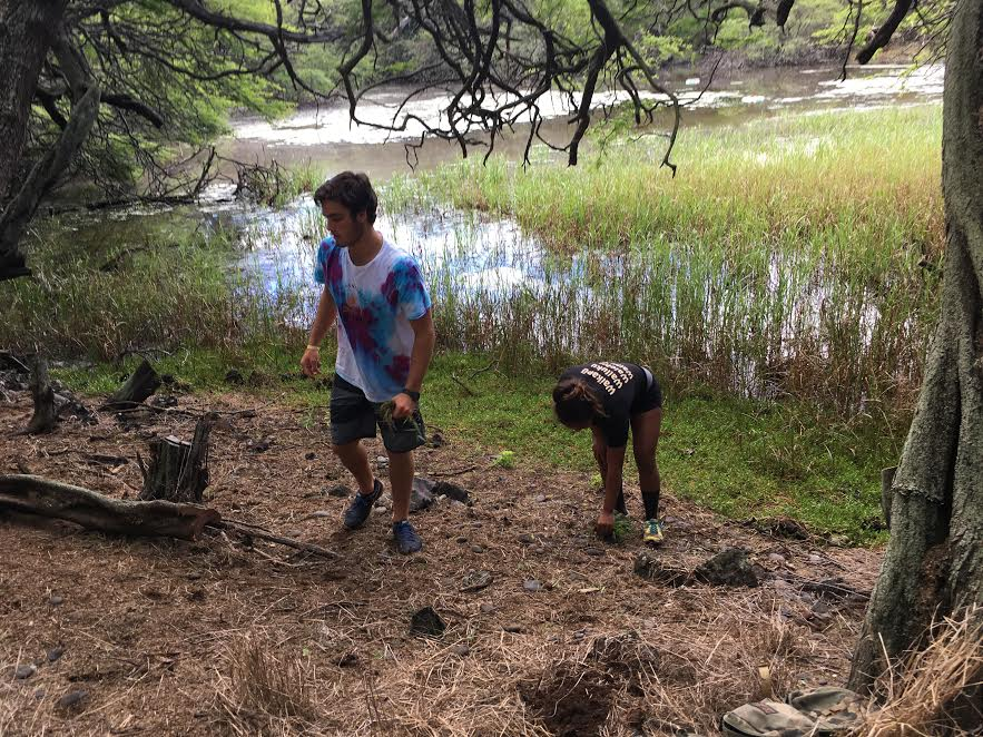 Seabury Hall students help remove invasive species at the Nuu Refuge, Maui