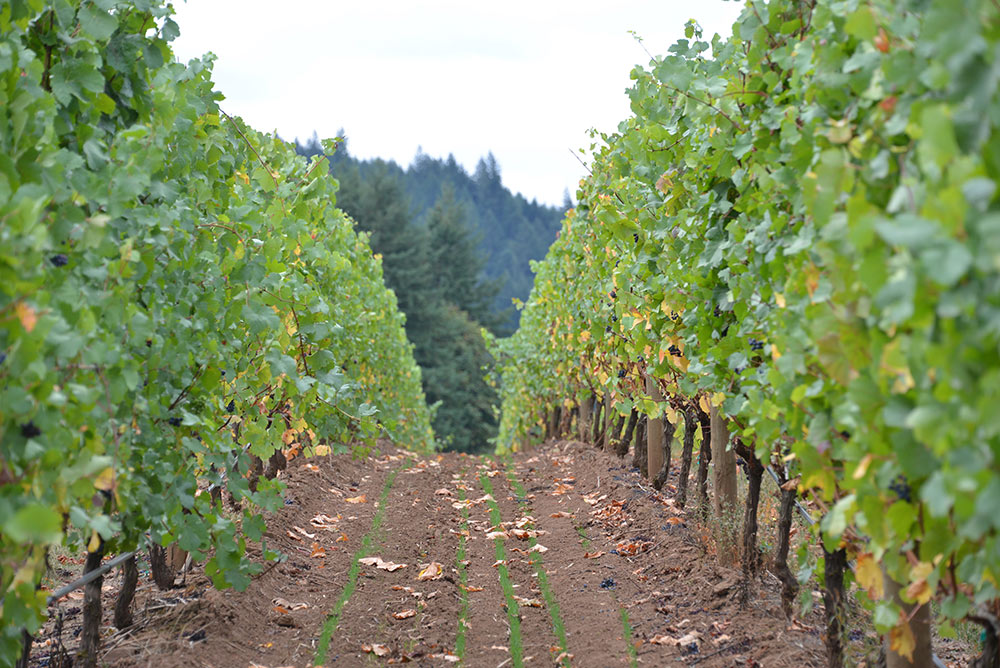 Vineyard-Thumb-1.jpg