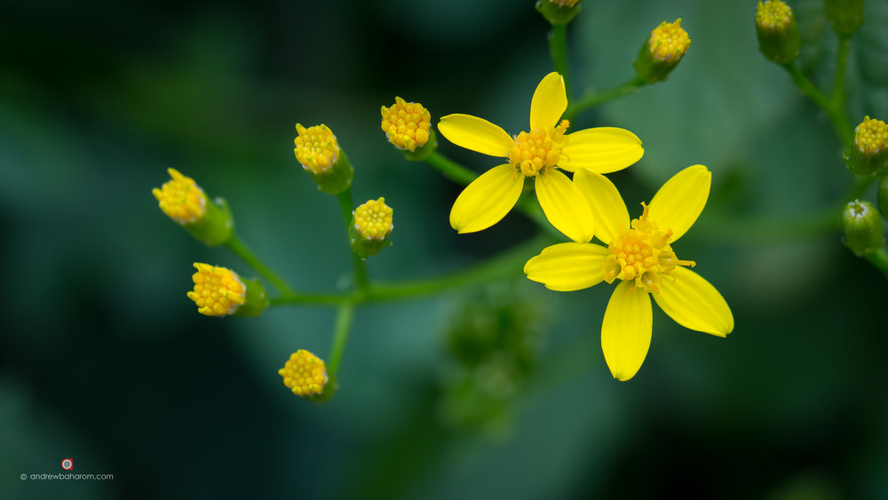 Bright Yellow Flowers.jpg