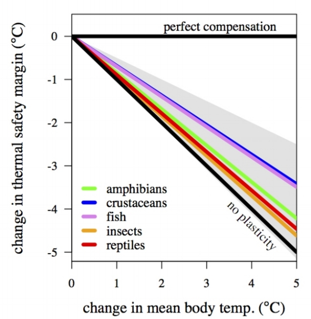 Acclimation in the heat tolerance of ectotherms does not fully compensate for rising temperatures. From Gunderson & Stillman 2015  Proc. Roy. Soc. B.