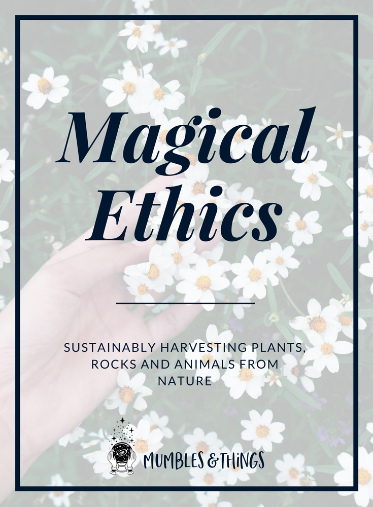 magical-ethics-sustainable-harvest-blog.png