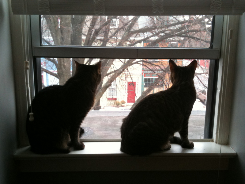 Our two cats silhouetted in the window.
