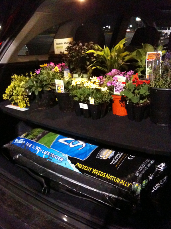 Flowers in trunk of car.