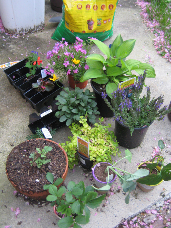 Flowers and plants laid out before planting.