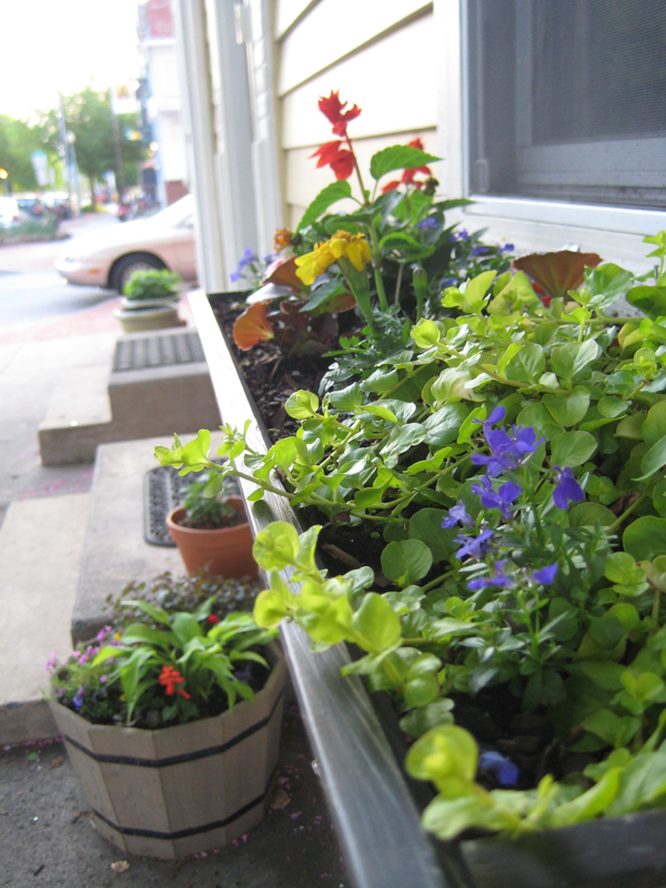 Close up of flower box showing the planter in the background.