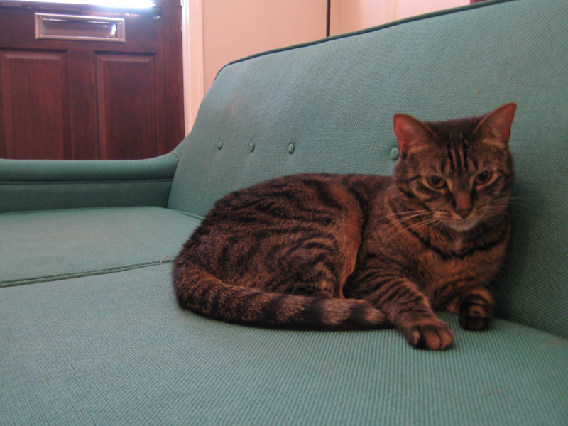 Cat on blue-green mid-century modern sofa.