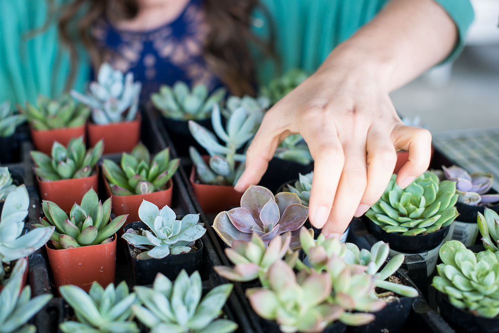 Succulent Workshops