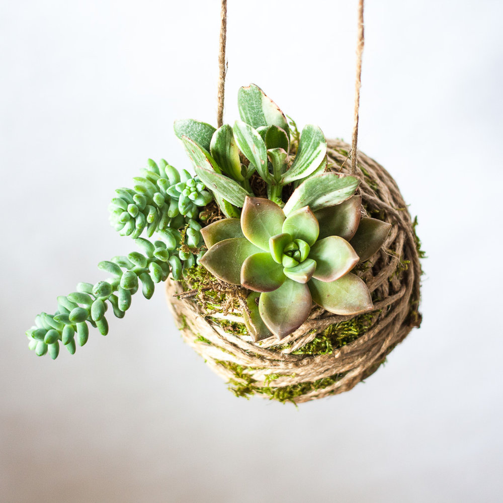 "5"" Dirty Kokedama$36 per person - 5"" Dirty Kokedama Succulent Hanging Garden with 3 - 2.5"" succulents. We get to play with mud and form the container out of dirt that will hold this hanging garden. Gloves provided!"
