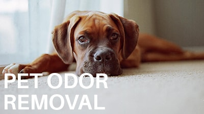 Pet Odor Removal Cleaners and Experts Company Madison WI .jpg