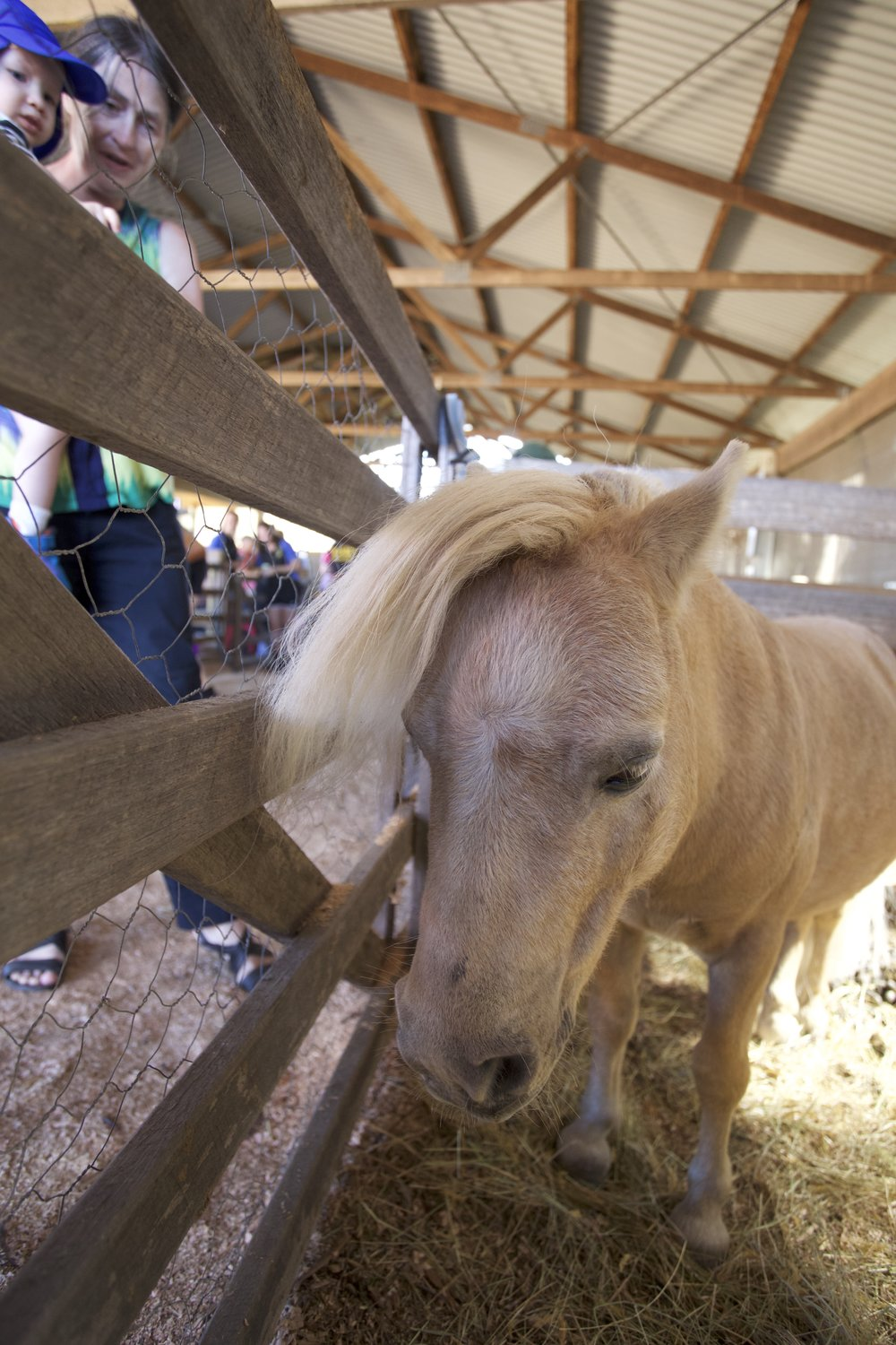 With a fringe like this, this pony could have entered the show boy!