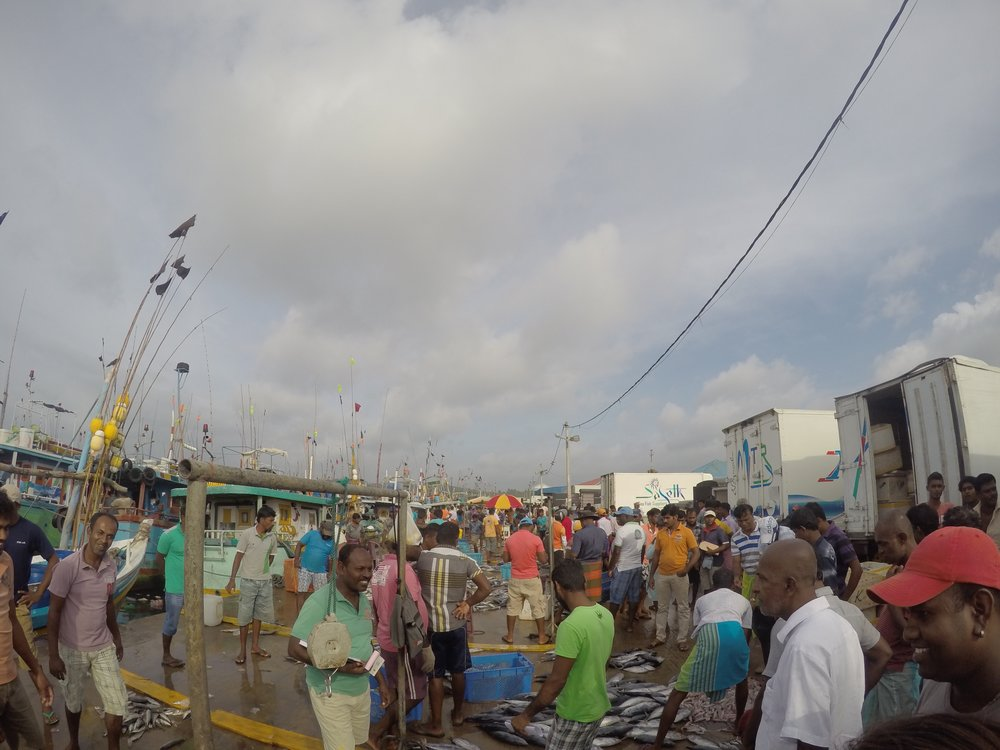 Fish Market in Tangalle