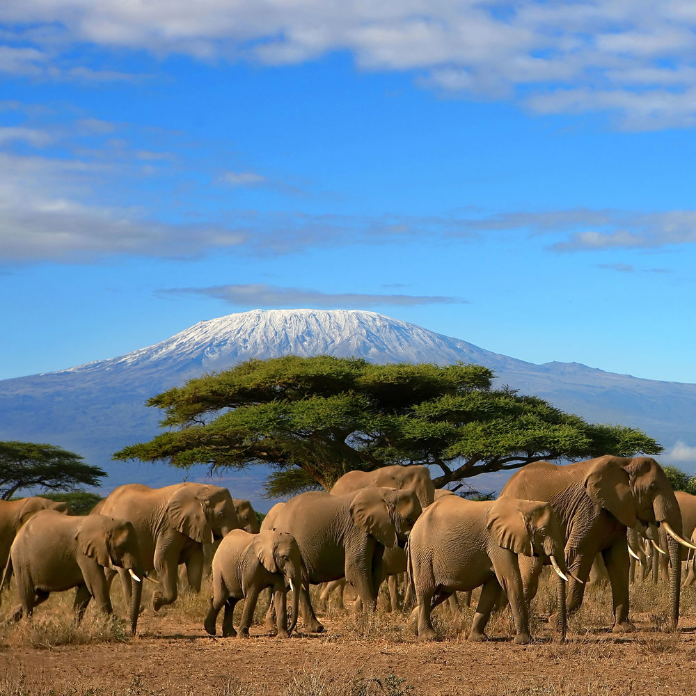 Mount-Kilimanjaro-And-Elephant-Herd-Kenya.jpg
