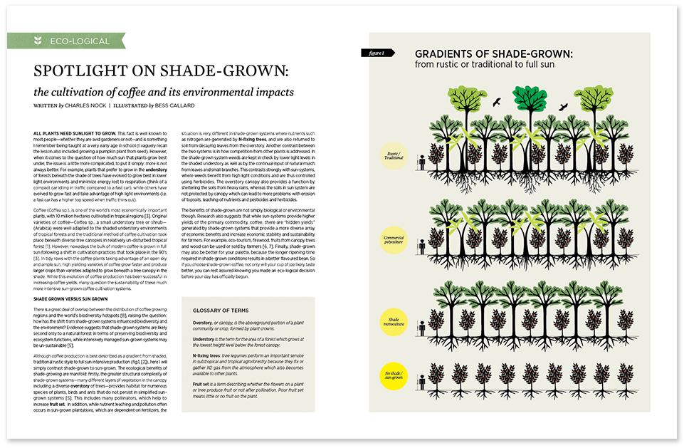 Shade-grown-image2.png